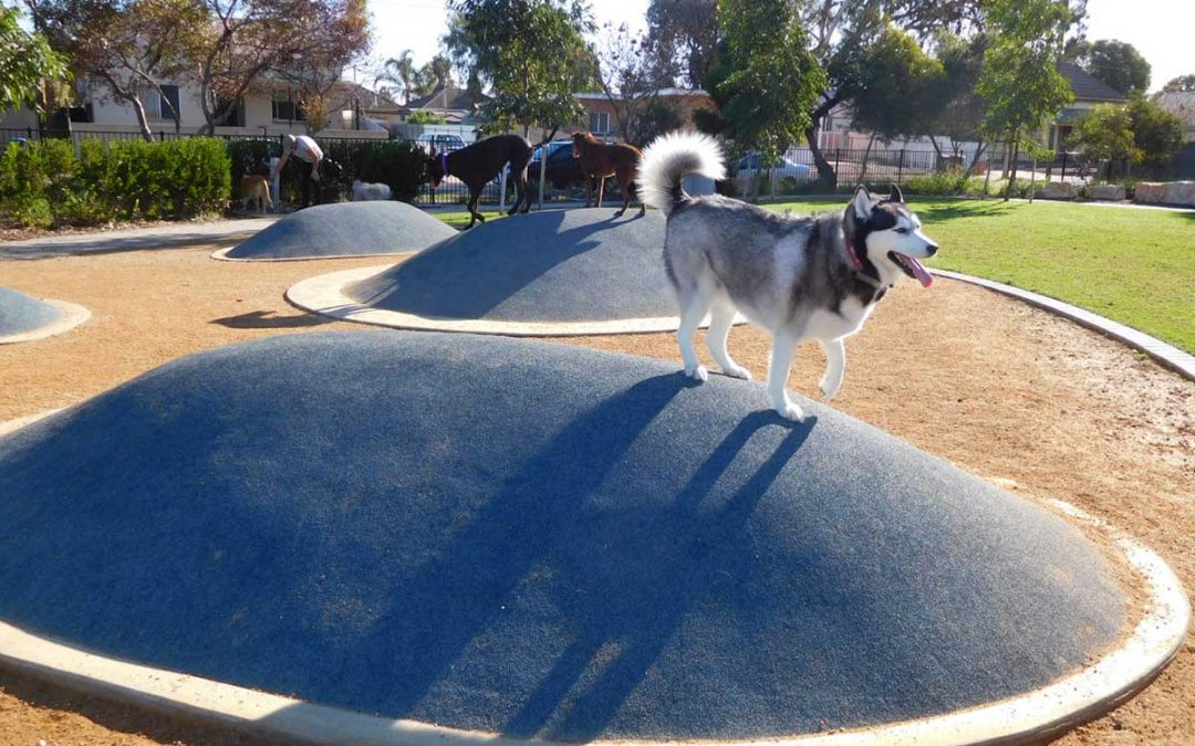 Urban planner Fiona De Rosa on designing dog parks